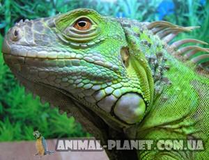 Ящерицы, которые впервые появились на планете Земля назывались...