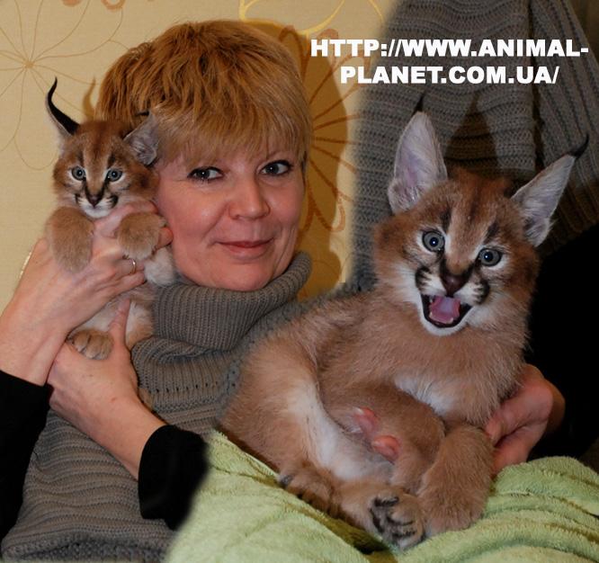 Питание кошки в домашних условиях 46