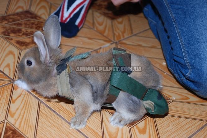 Подгузники для кроликов своими руками 92
